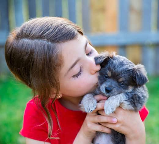 Little girl in red t-shirt holds up a gray puppy as she kisses him.