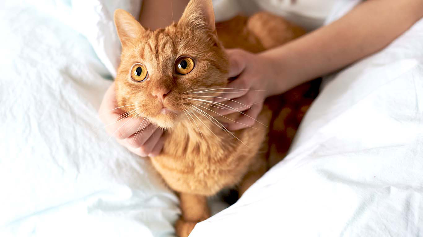 Urolithiasis in cats - what to do