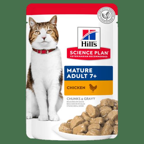 mature Hills adult feline